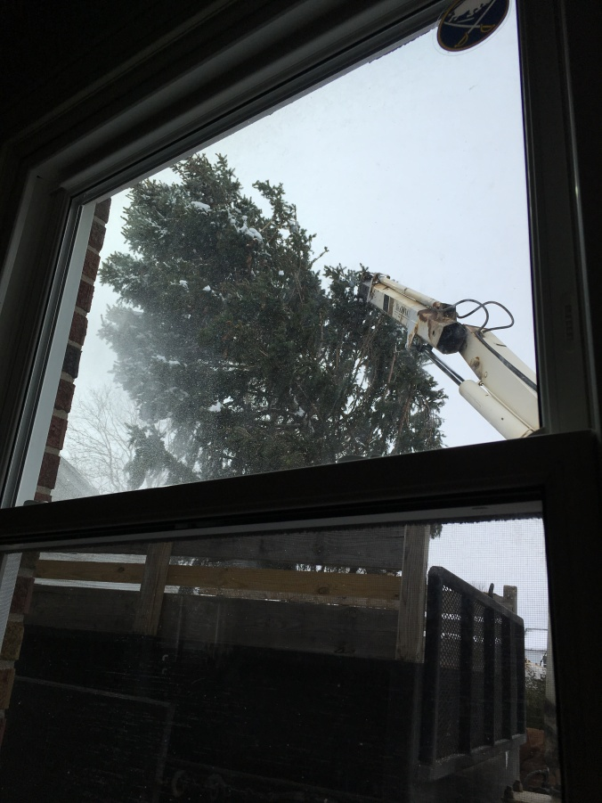 Monday: Tree being removed from the garage roof.